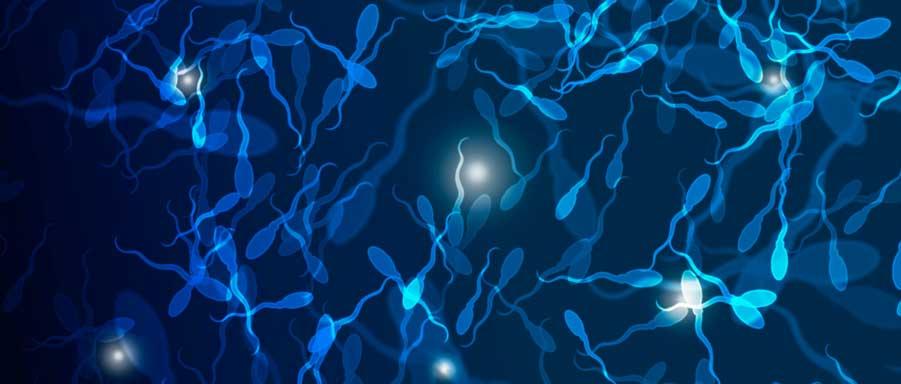 нарушенна подвижность сперматозоидов у мужчины